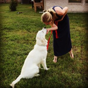 Colonial Dog Training Boston will work with you until ALL of your goals are met!