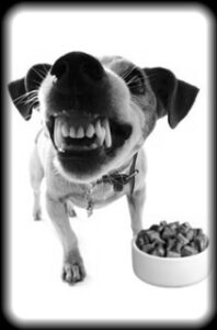 We can help with food aggression and any aggressive behavior - Boston dog training
