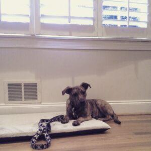 Boston Dog Training programs for aggressive dogs