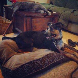 Boston Dog Trainer Blog