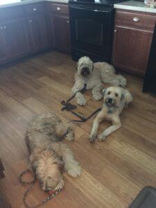 Dog Training Boston Blog