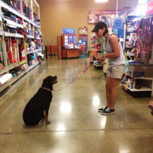 Boston Dog Training = Owner Training