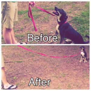 Our Boston dog training program is designed to work directly with your dog's vet!