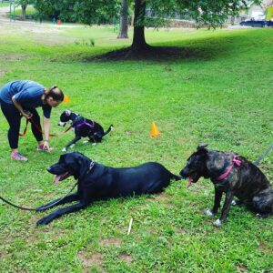 Dog Training can be FUN with Colonial Dog Training Boston